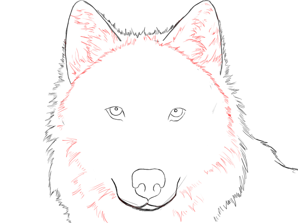 1024x768 Easy Wolf Drawings Step Step