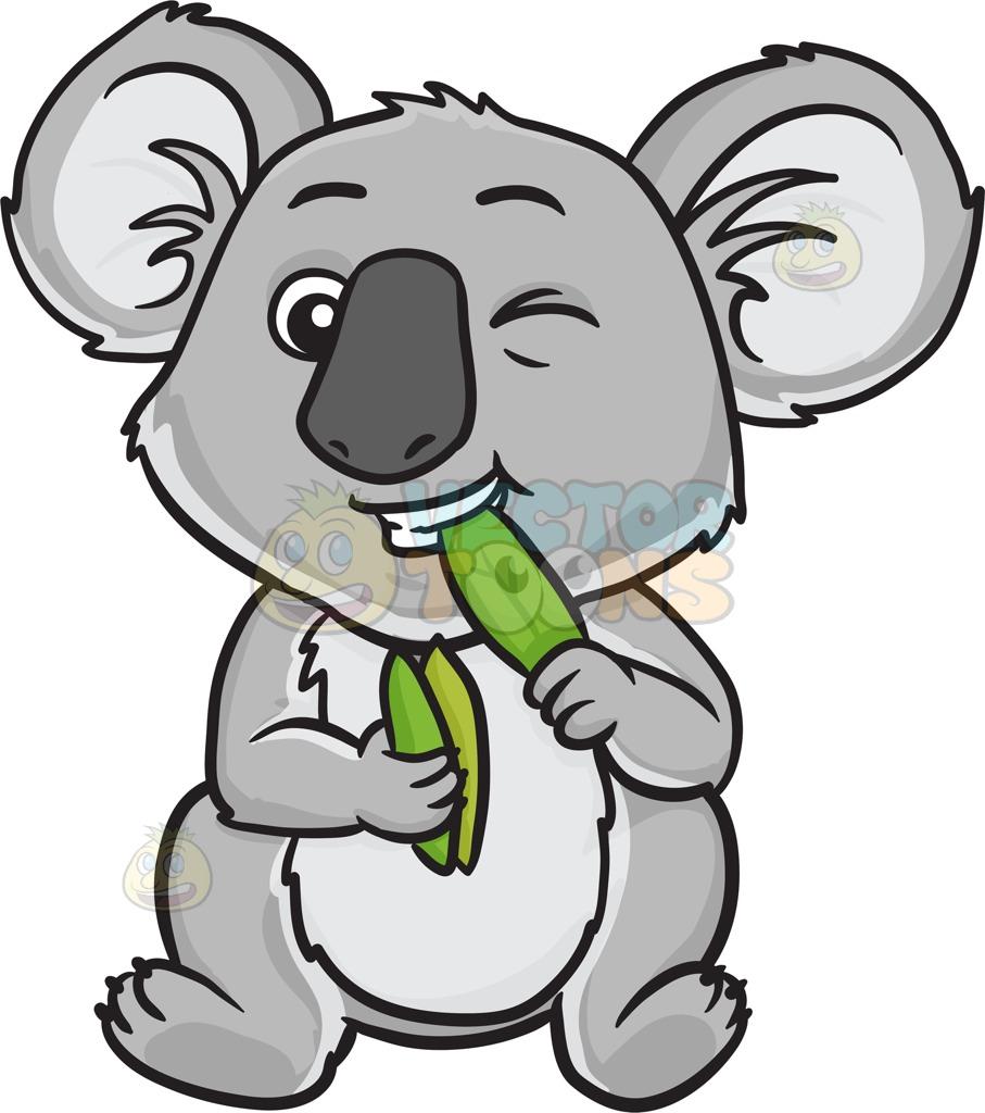 907x1024 A Koala Bear Eating Leaves