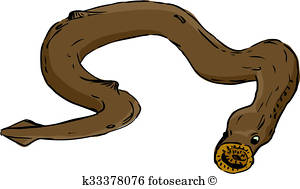 300x189 Eel Illustrations And Clipart. 114 Eel Royalty Free Illustrations