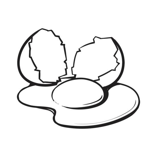 612x612 Shell Clipart Broken Egg