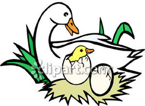 300x219 Duckling Clipart Duck Egg