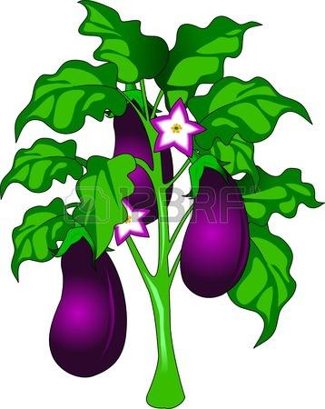 Eggplant Cliparts