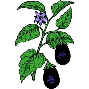 300x300 Eggplant Color Clipart, Cliparts Of Eggplant Color Free Download