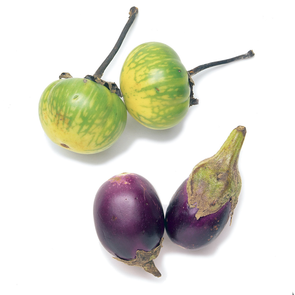 1000x1000 Eggplant