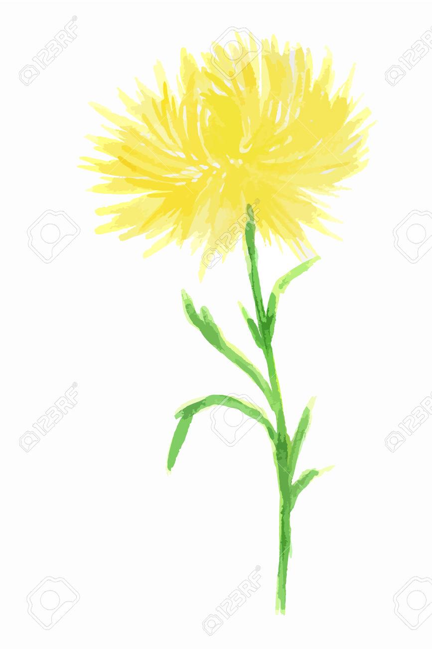 867x1300 Dandelion Clipart Elegant Flower