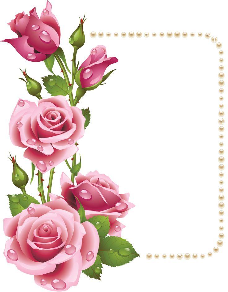 736x942 Pink Rose Clipart Elegant Flower