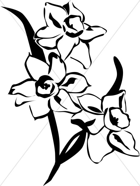 461x612 Spring Daffodils Black And White Church Flower Clipart
