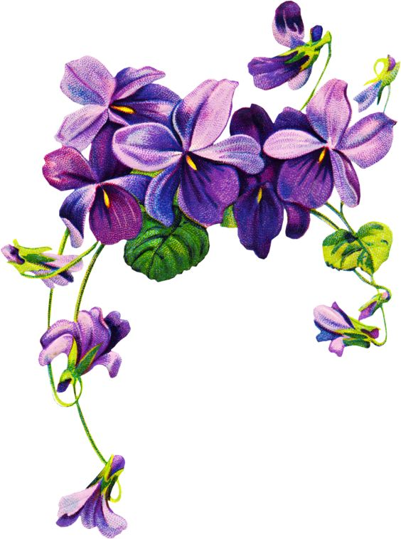 564x758 Watercolor Illustration Flower In Simple Background Art