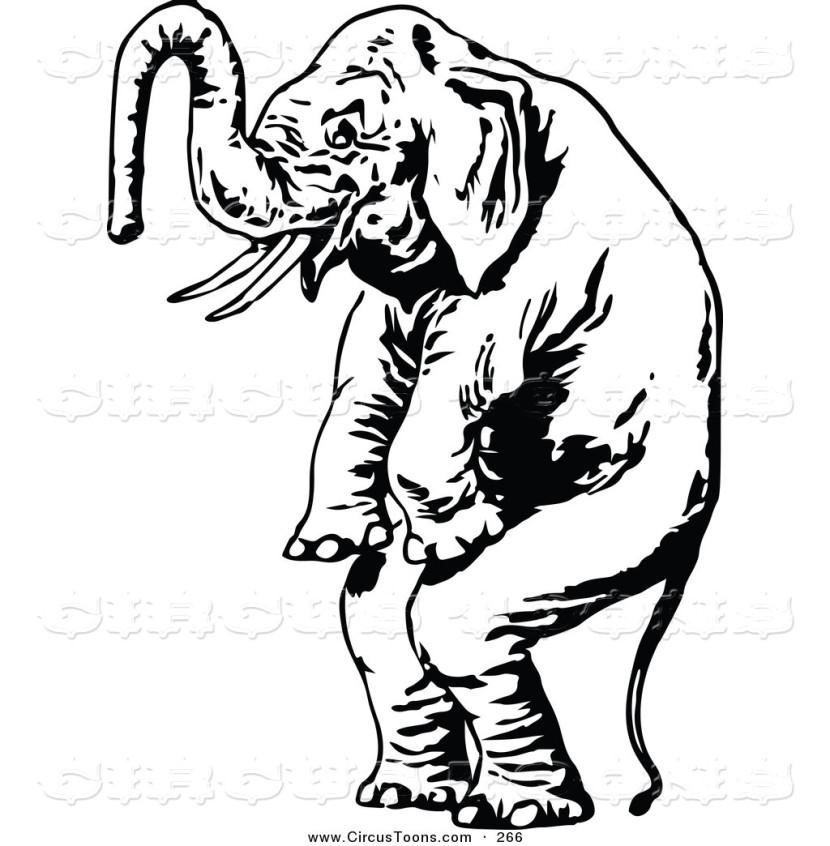 830x846 Standing Elephant Clipart