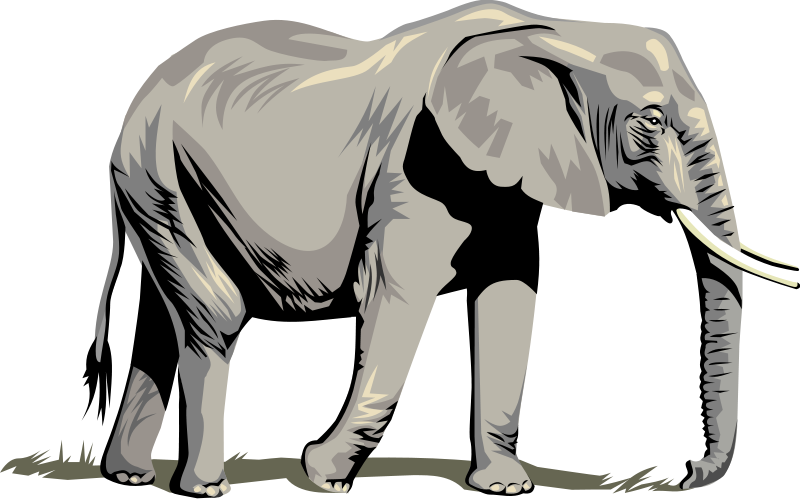 800x499 Elephant clip art black and white free clipart 6