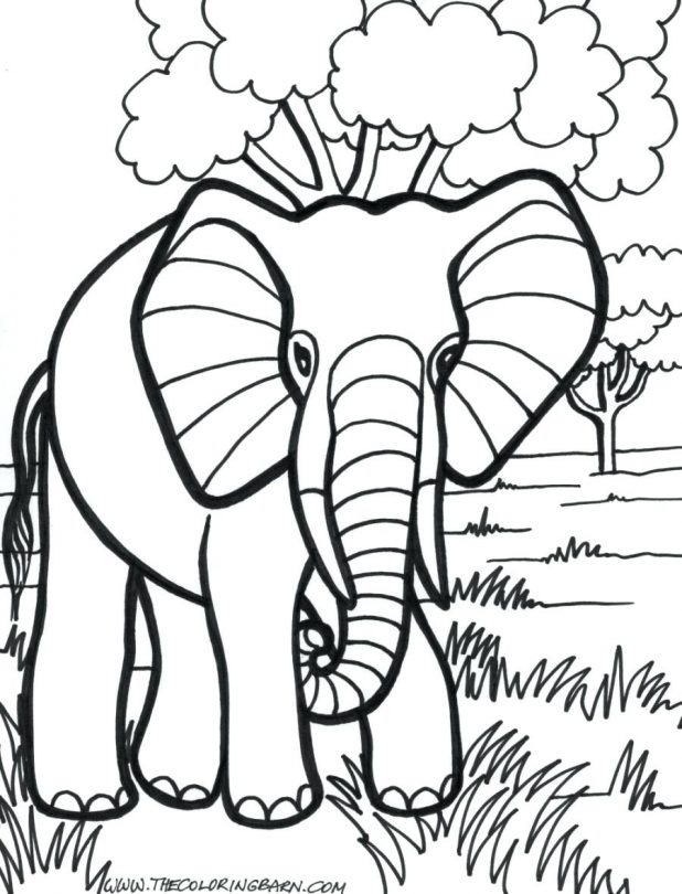 618x810 Coloring Pages Marvellous Coloring Page Elephant. Coloring Page