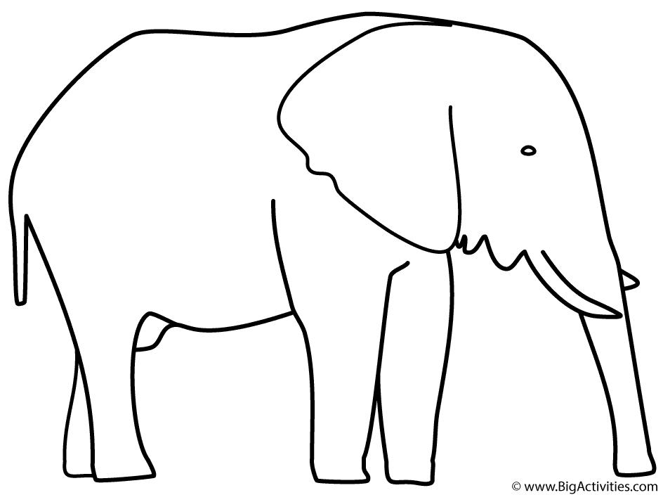 944x704 Elephant