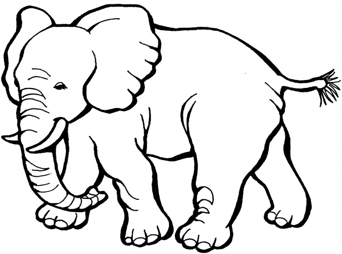 700x520 Elephant Coloring Pages