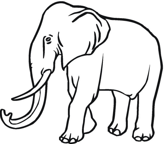 550x483 Majestic Elephant Coloring Page