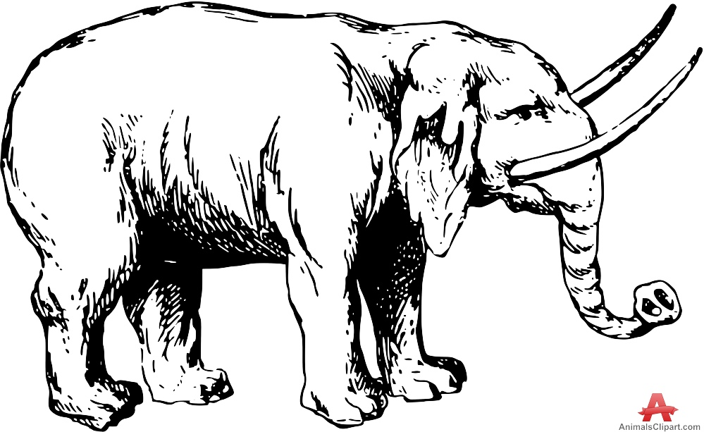 999x613 Elephant With Large Tusks Drawing Clipart Free Clipart Design