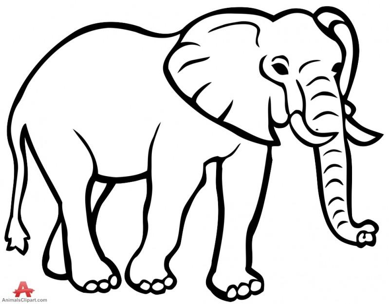 799x625 Newest Elephant Image Outline