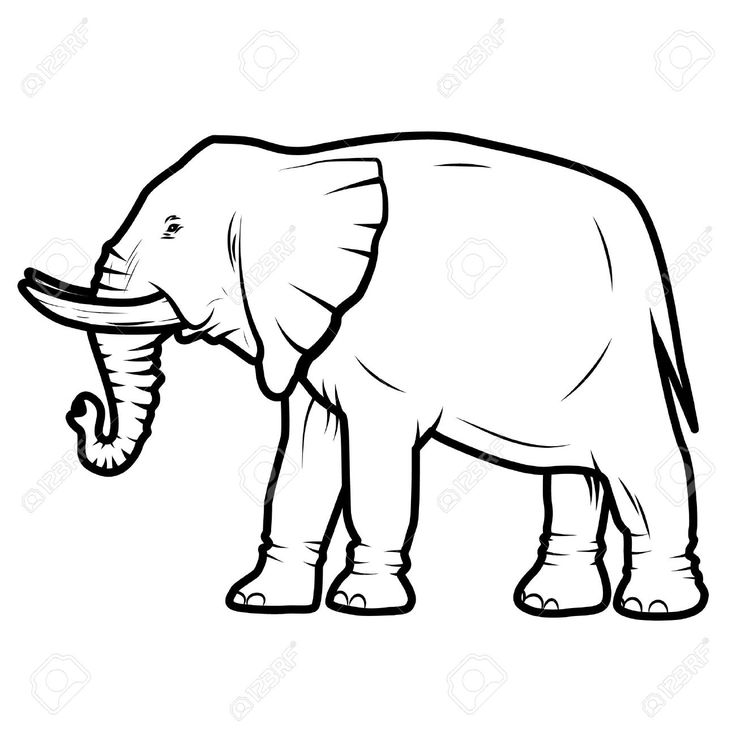 736x736 66 Best Elephant Images Elephant, Draw And Elephants