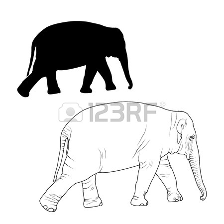 450x450 Elephant Adult Animal Detailed Outline Sketch Drawing And Black