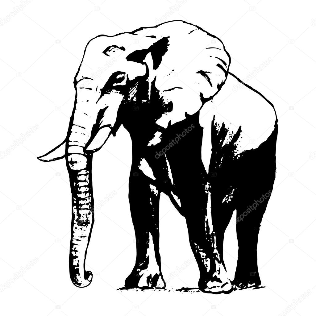 1024x1024 Elephant In Black And White, The Graphic From The Hand Stock