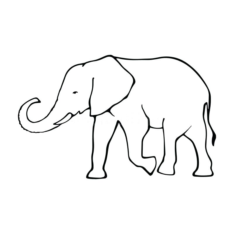 800x800 Outline Of Elephant Cool Black Outline Mandala Elephant Tattoo