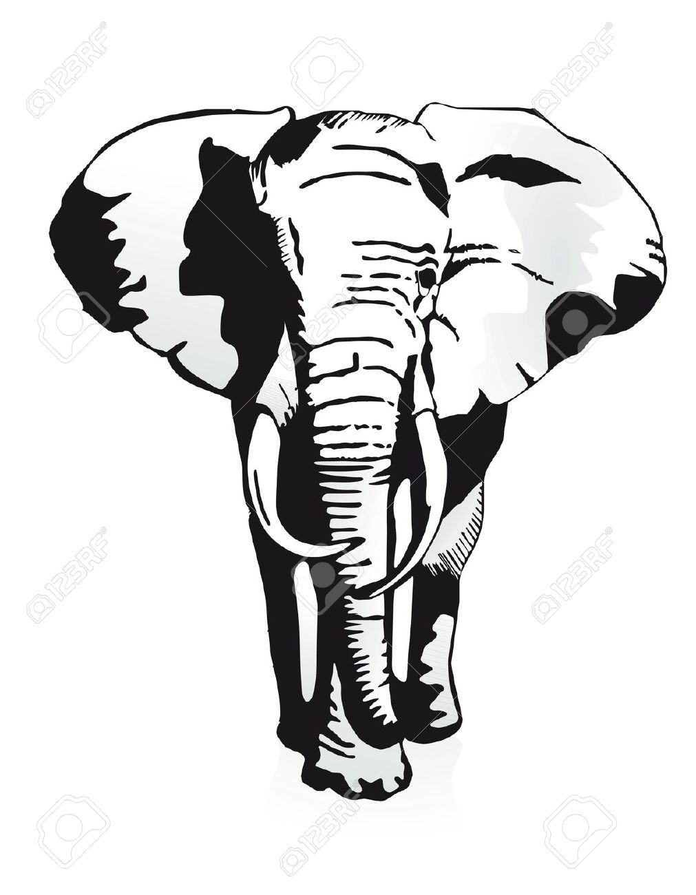 1011x1300 African Elephant Black And White Clipart