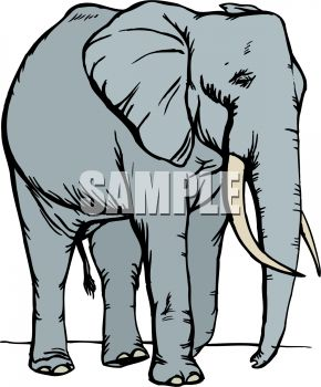 290x350 Picture Of An Adult Large Elephant Walking In A Vector Clip Art