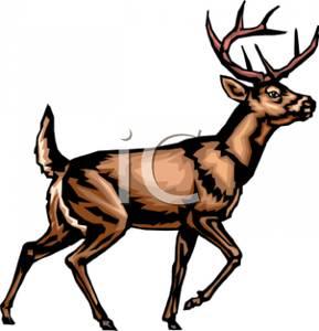 289x300 Image A Cautious Elk Walking