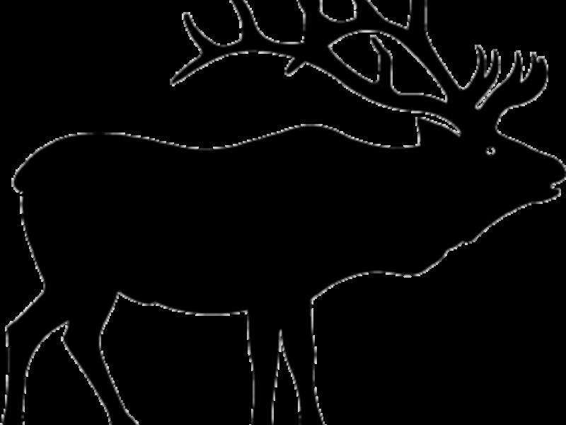 800x600 Pretentious Inspiration Elk Clip Art Top 83 Clipart Free Image