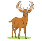 180x173 Top 80 Deer Clipart