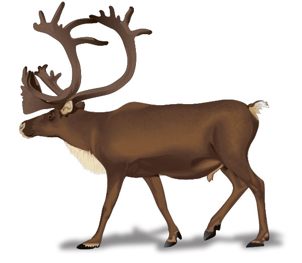 600x523 Top 96 Caribou Clip Art