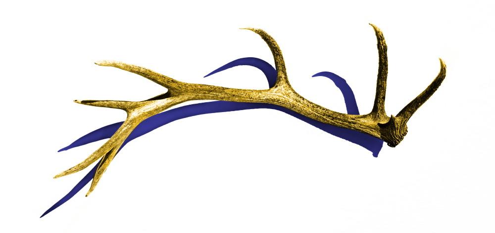 1000x472 Elk Clipart Elk Horn