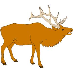 300x300 Elk Head Clip Art