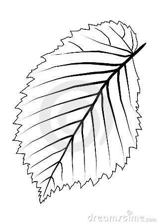 318x450 Elm Leaf Clipart