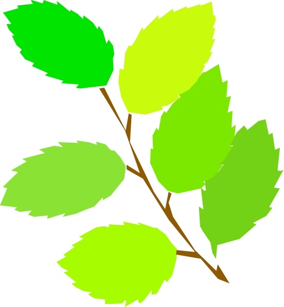 552x598 Leaf Clipart Elm Tree