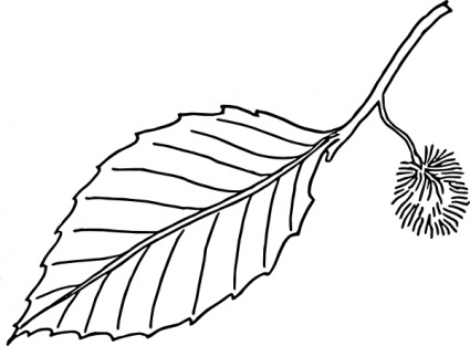 425x313 Maple Leaf Outline Clipart