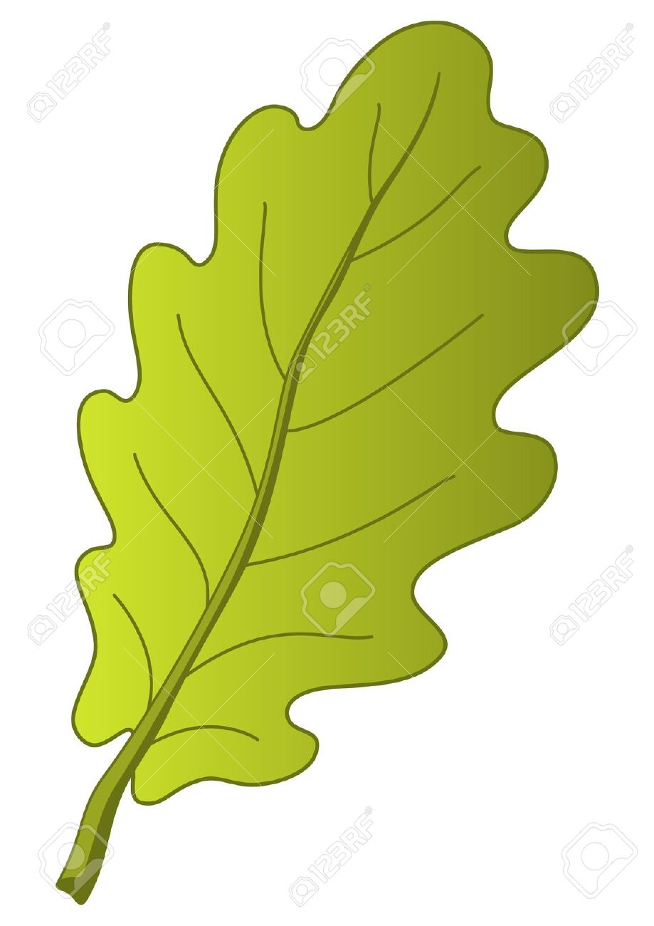 919x1300 Nature Clipart Oak Tree