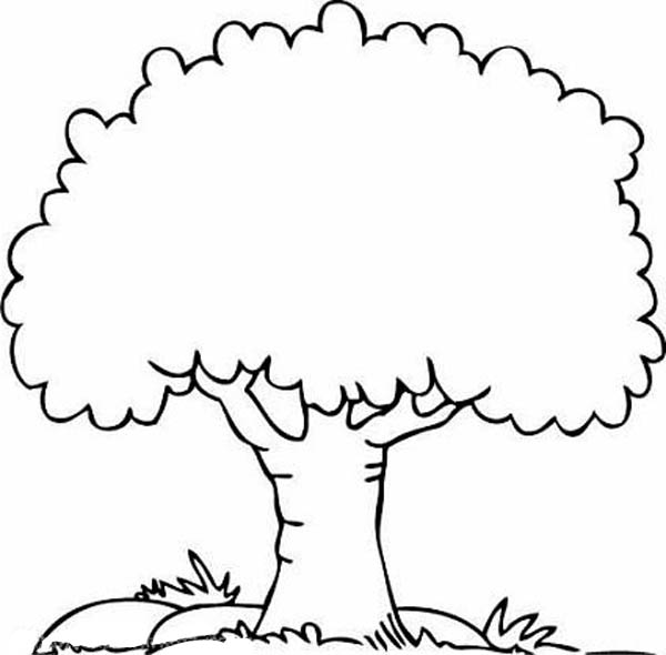 600x590 Tree Coloring Pages 8 Coloring Tree Clipart, Clip