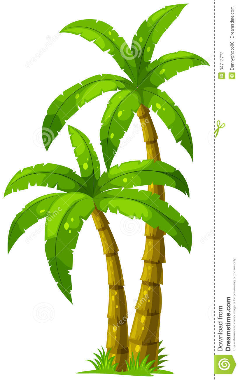 823x1300 Two Palm Trees Stock Photos