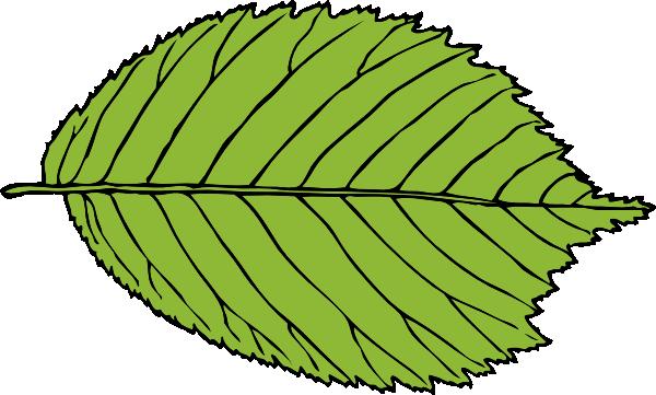 600x361 Bi Serrate Leaf Clip Art