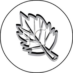 300x300 Elm Leaf In A Circle Design
