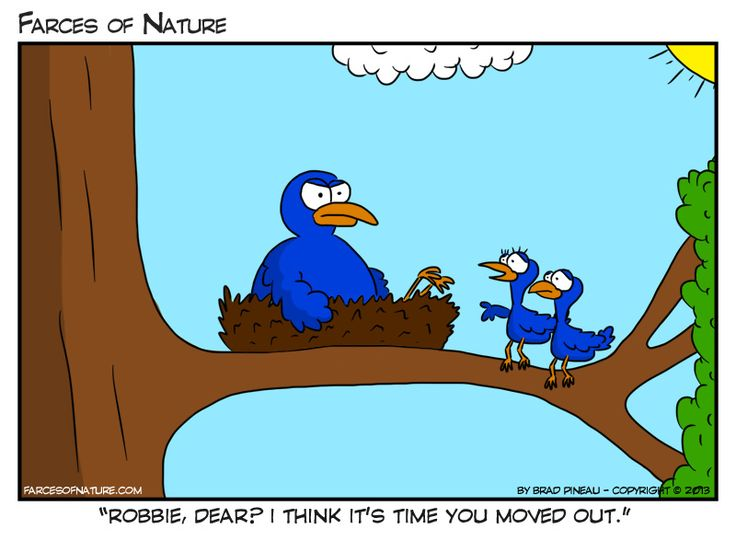 Empty Bird Nest Cartoon