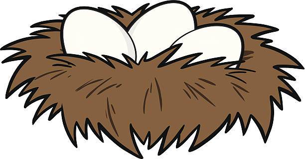 612x320 Nest Clipart Vector