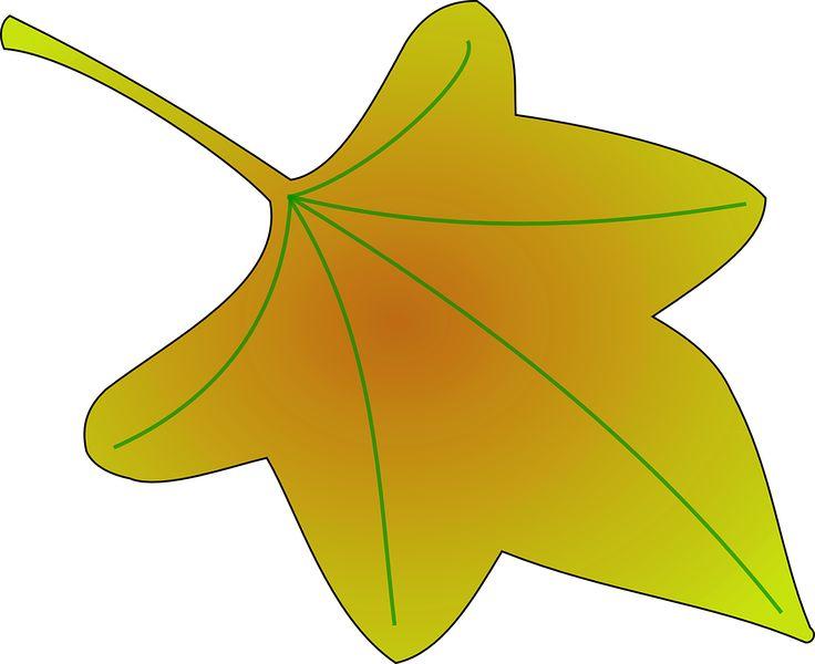 Eucalyptus Leaf Clipart
