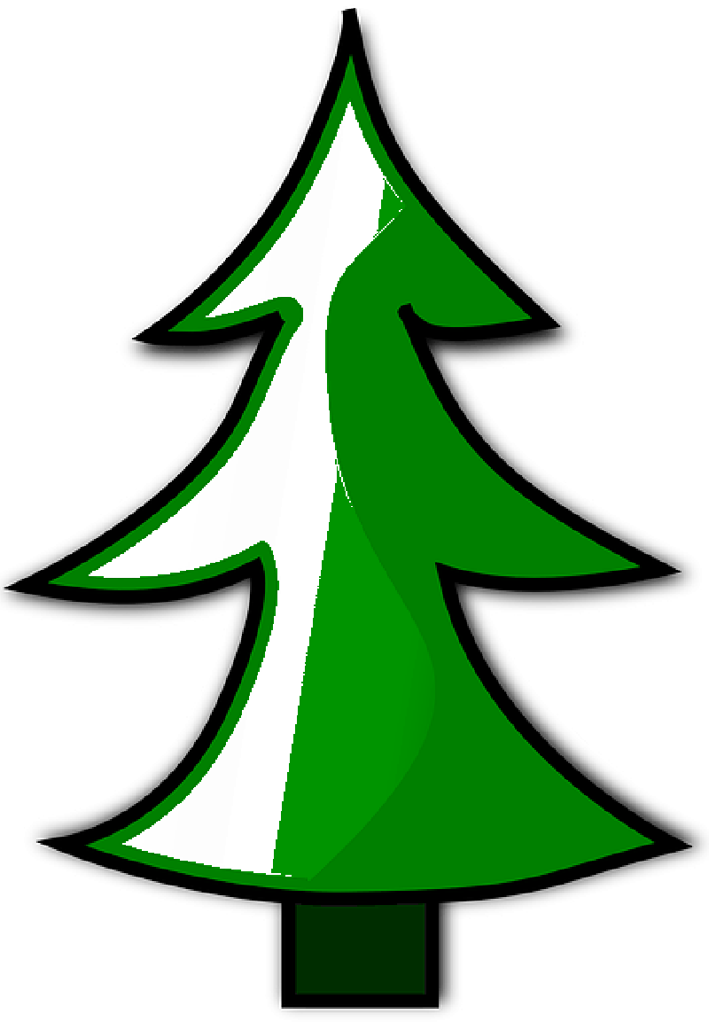 800x1153 Conifer, Evergreen, Fir Tree, Christmas Tree, Tree