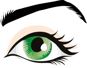 300x236 Eyelash Clipart Brow