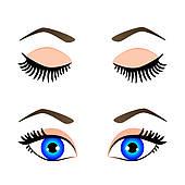 170x170 Eyelashes Clip Art