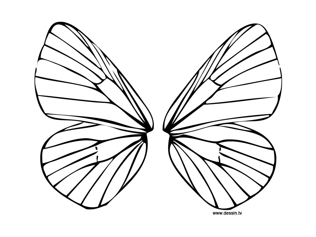 1024x768 Fairy Wings To Colour Diplodocus Para Colorear Fairy Wings