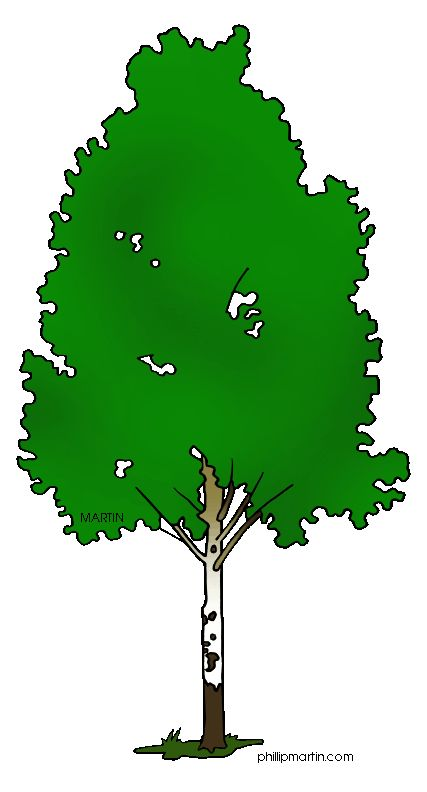 427x792 22 Best Clip Art Trees For Animated Power Points Images