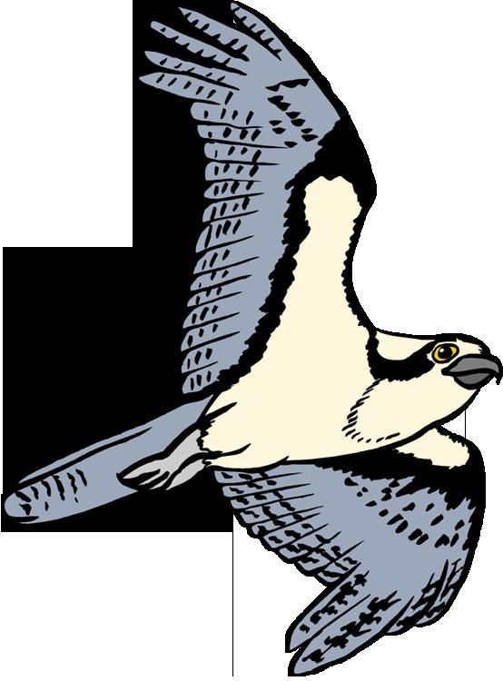 554x750 Bird Of Prey Clipart Osprey