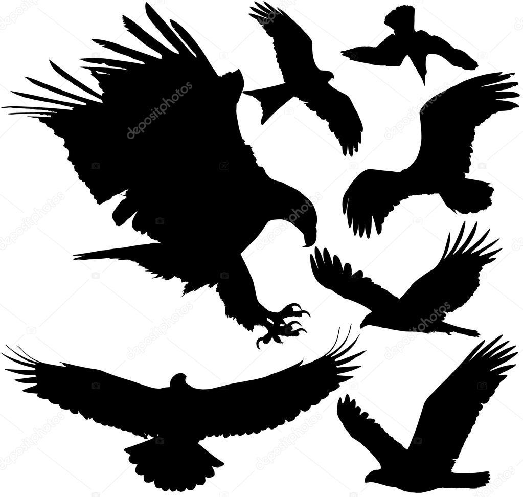 1023x972 Bird Of Prey Clipart White Falcon